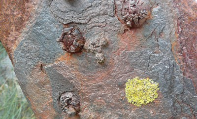 lichen and rust